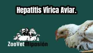 Hepatitis Vírica Aviar.