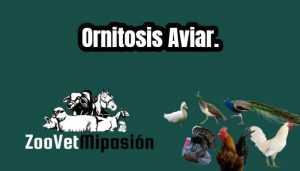 Ornitosis Aviar.